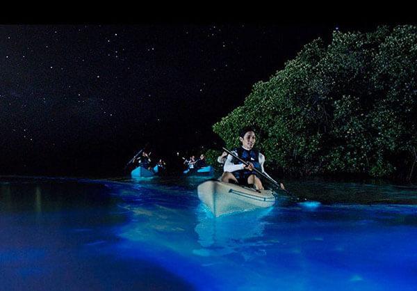 Bio Bay Cayman